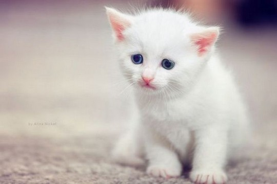 Sad kitten is sad.