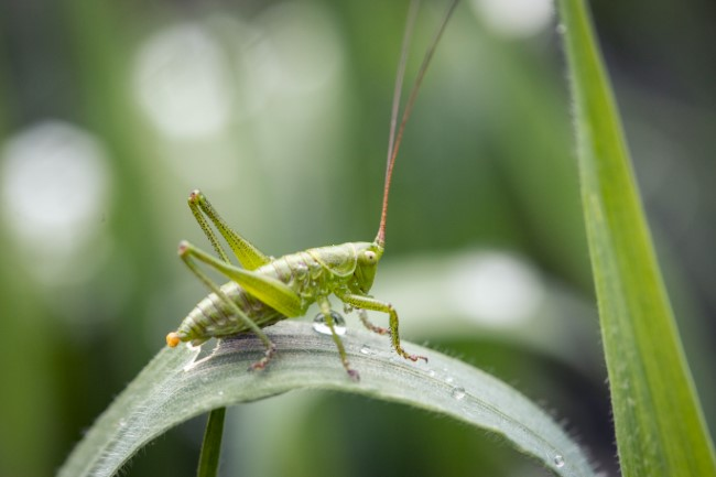 Crickets and Other Things