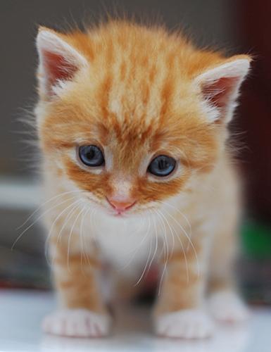 sorry_kitten