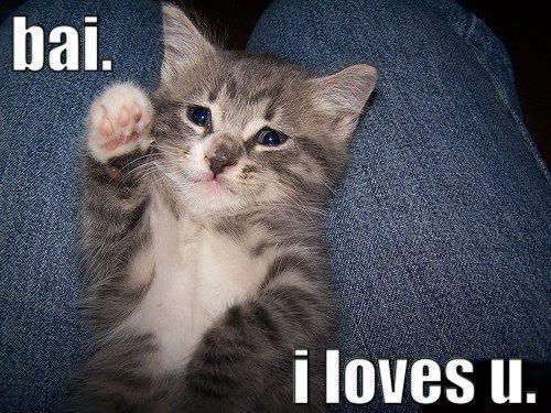 kitten-kittenwavinglookingverysadby