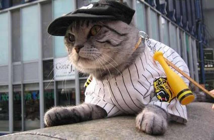 cat-baseball-player