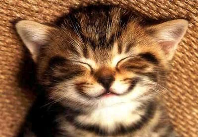 smile-kitten-large